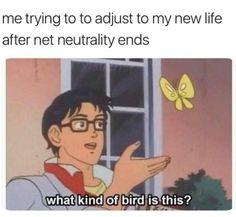 Net neutrality | Tumblr