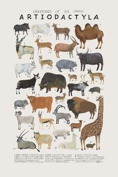 Natural history art prints by Kelsey Oseid #illustration #nursery #animals…