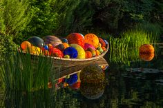 Major outdoor exhibition of artwork by Dale Chihuly opens at Denver Botanic Gardens