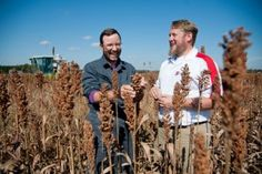 Growing the grain industry: Solutions benefit both crop and animal producers.