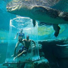 Crocosaurus Cove Aquarium, Australia. Like a shark cage....Not no, but HELL YES!!