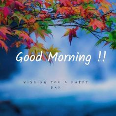 Good Morning Rose Images, Happy Good Morning Quotes, Good Morning Beautiful Pictures, Good Morning Nature, Morning Wishes Quotes, Cute Good Morning, Morning Inspirational Quotes, Good Morning Flowers, Good Morning Messages