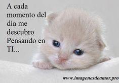 Gatos tiernos con frases bonitas de amor - http://www.imagenesdeamor.pro/2014/05/gatos-tiernos-con-frases-bonitas-de-amor.html