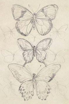 Vintage Butterfly Sketch I Canvas Artwork by June Erica Vess | iCanvas