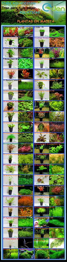 Plants for your aquarium - Live plants take a bit more effort but they make a huge difference in the water quality and the inhabitants really seem to notice the difference! Some a easy, others are a bit more difficult to grow. Do your research and get started!