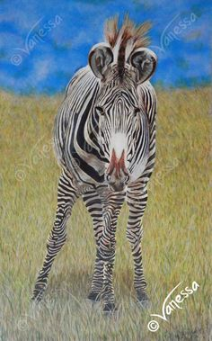 "DON'T WALK WALK A3 Lithograph Print of Grevy's Zebra Realism Painting by VLGStudios A3 lithographic print on card of my original painting entitled ""DON'T WALK, WALK! ""  Completed in May of 2012, using acrylic paints, it depicts an inquisitive Grevy's Zebra from a herd at Chester Zoo. The image is based upon a digital photograph by Vanessa Grundy. Your print will be signed and dated by the artist. The prints are A3 in size: 11.7"" (297mm) wide by 16.6"" (420mm) high."