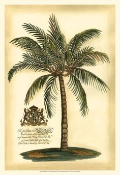 British Colonial Palm III Art Print