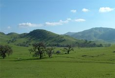 "San Juaquin Valley Scene: ""Happy Cows are from California"". The Serene Sierra Nevada Mountain Range Foothills in Central California."