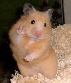 Hamster mais fofo mos á slfie ! Grumpy Cat Quotes, Dog Quotes Funny, Grumpy Cat Humor, Funny Dogs, Dog Humor, Grumpy Cats, Humor Quotes, Memes Humor, Wisdom Quotes