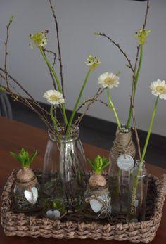 spring bulbs in glass vases Cosy House, Spring Bulbs, Leaf Art, Fresh Flowers, Flower Art, Flower Power, Planting Flowers, Flower Arrangements, Crafts