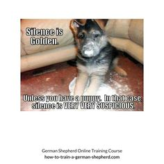 It can be tiresome looking for different Black German shepherd Names. Before naming your dog, keep few things in mind like your dog sex,size,personality etc German Shepherd Temperament, Black German Shepherd Puppies, German Shepherd Names, German Shepherd Training, German Shepherds, French Bulldog Puppies, French Bulldogs, Dog Shaming, Puppy Names