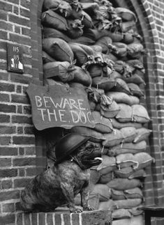 The Guard Bulldog | The 26 Most Badass Animals From World War II