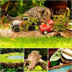 Patti Brisebois' Manitoba zone 3 garden. Patti'splantings are very  creative and include old toy trucks, tree stumps and driftwood.