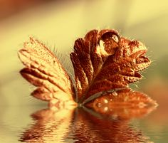 Autumn dew by Natalia Flora on 500px
