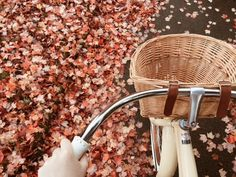22 things to do in Autumn – • Teenager Online•