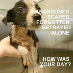 They are abandoned, scared, and alone and need you. Look into your heart and help in anyway you can. Donate, adopt, volunteer.....