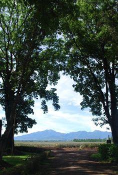 Mt Kitanglad, Bukidnon #Philippines
