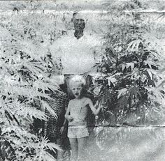 Great Grandpa was a Hemp Farmer for the US Government