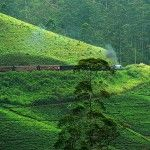 Nuwara Eliya draws the attention of plenty of people towards its many picturesque sites.
