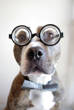 brains and good looks perfect pitbull combo :)