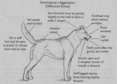 Learn how to handle fearful behavior and fear aggression in dogs. Dr. Mark Nunez shares his expertise on dog behavior and dog training.