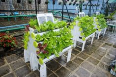 HydroPro Systems installed at a Rooftop Garden in Hong Kong – Garden Ideas Hydroponics System, Hydroponic Gardening, Vertical Garden Systems, Vertical Green Wall, Aquaponics Fish, Rooftop Garden, Hong Kong, Diys, Layout
