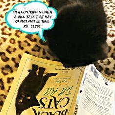 Clyde, The Senior Black Cat Blogger's First Gotcha Day – Cat Wisdom 101