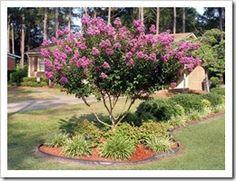 Red Dirt Gardening - good info for Oklahoma gardeners