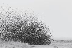 bee swarm flying - Google Search