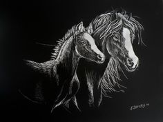 """Scratchboard Horse Drawing. """"Mare and Foal"""" 