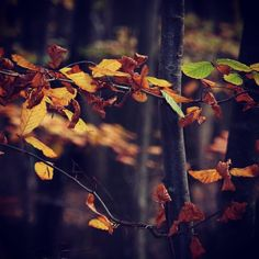 Møllegårdsskovstien  #visitfyn #fyn #nature #visitdenmark #naturelovers #natur #denmark #danmark #dänemark #landscape #assens #motivation #mitassens #vildmedfyn #fynerfin #vielskernaturen #visitassens #instapic #fall #autumn #efterår #trees #november #forest #skov #wald #opdagdanmark #møllegårdsskoven #hjertesti #hjerteforeningen