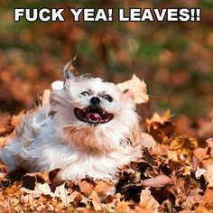 I watched a video of a husky bounding through a huge pile of leaves. It was hilarious!!