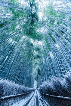 Bamboo pathway in snow, Kyoto, Japan