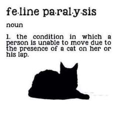 A cat-related term, defined.