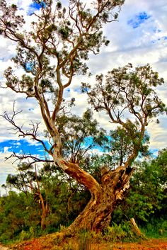 Beautiful Trees - Hollands Landing, Victoria - Australia