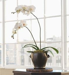 Bedroom must have a white potted orchid!