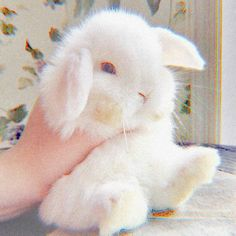 Do you like bunnies? Cute Little Animals, Cute Funny Animals, Cute Cats, Aesthetic Themes, Pink Aesthetic, Cute Baby Bunnies, Cute Babies, Sacs Louis Vuiton, Cute Wallpapers