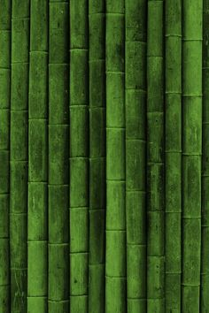 Green Green Green! Bamboo