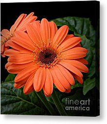 Perfection Photograph by Chalet Roome-Rigdon - Perfection Fine Art Prints and Posters for Sale