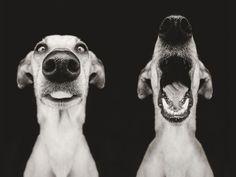 Perros expresivos y fotogénicos | Cuidar de tu mascota es facilisimo.com