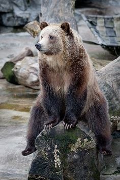 "Grizzly Bear-- ""Okay, tell me more!"""