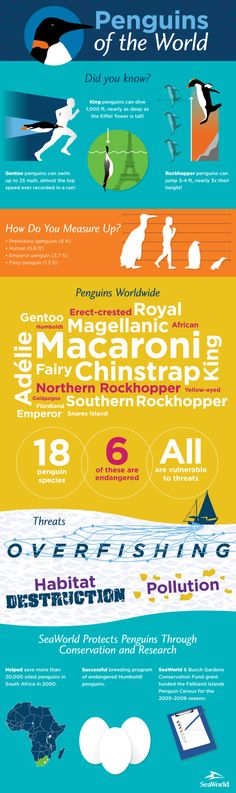 How much do you know about penguins worldwide? Find out!