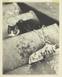 On the stairs: Ilse Bing's Cat, gelatin silver print, 1931. In the collection of The Art Institute of Chicago.