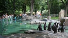 Prague zoo Zoo Tickets, Prague Zoo, Park, World, Places, Travel, Animals, Zoos, Museums