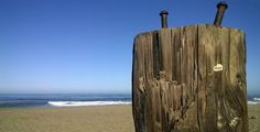 Driftwood Post Linda Mar Beach Pacifica CA    Beach, Nature #beachphotography, #gratitude, #nofilter,  Daily Gratitude, Daily Meditation, Daily Surprise, Driftwood, Linda Mar Beach, Meditation, Nokia Lumia 822, Photography