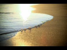 In Credo -- Siesta Del Sol - YouTube