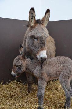 Twee nieuwe veulentjes - Cases - The Donkey Sanctuary Nederland - Wereldwijde ezelhulp