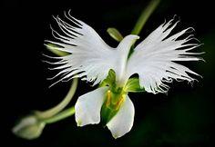 16 flores que se parecen increíblemente a otra cosa. | Viralismo