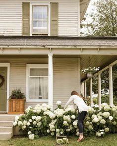 Front Porch Landscape, Front House Landscaping, Farmhouse Landscaping, Farmhouse Garden, Farmhouse Front, House Landscape, Modern Farmhouse, Annabelle Hydrangea, Hydrangea Landscaping