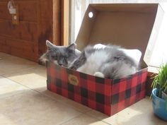 """Chilling out in his Plaid Pad with cool """"peek-a-boo"""" action window."""